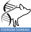 Foersom Svineavl